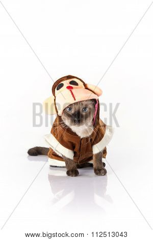 Siamese cat with a monkey costume on a white background