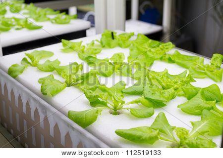 Hydroponic organic vegetable plots cultivation farm