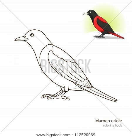 Maroon oriole bird coloring book vector