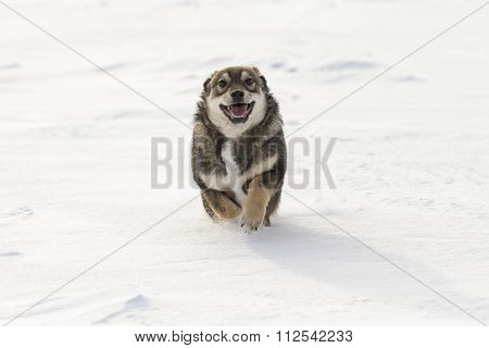 funny puppy playing in the snow