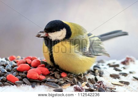 chubby yellow bird is eating nuts in the winter