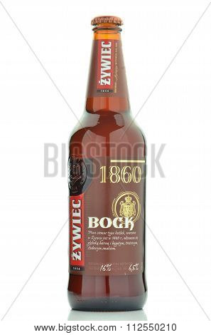 Zywiec Bock beer isolated on white background