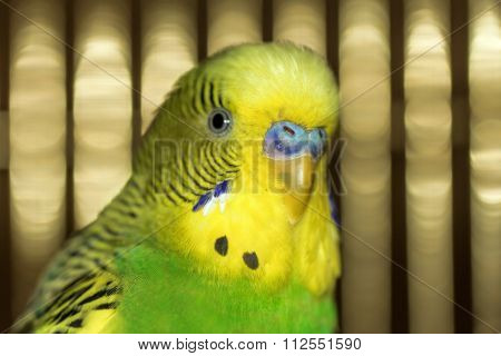 Portrait Of Yellow-green Parrot
