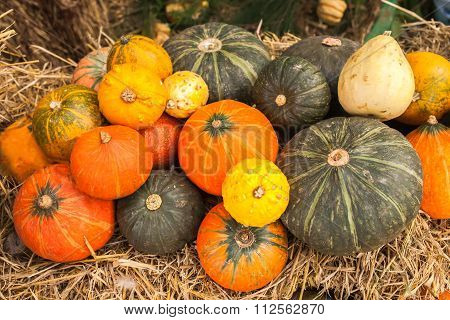 Pumpkin And Tuber Crop On Yellow Straw