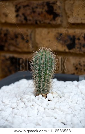 Decorative tub with white gravel and cactus. Vertical photo