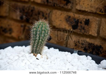 Decorative tub with white gravel and cactus