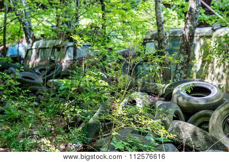 Old Tires In Woods