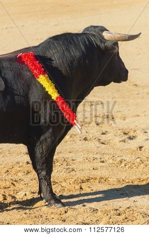 Bull Standing In The Bullfight