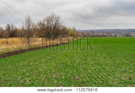 Landscape with winter crops field in central Ukraine.