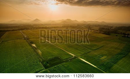 Aerial View Of Agriculture Field In Lopburi Province Central Of Thailand