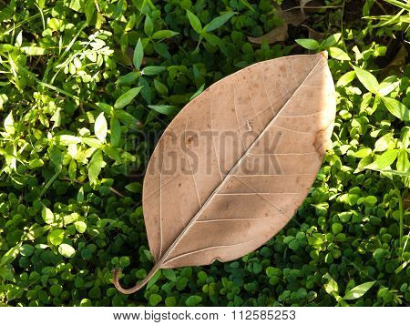 Dry Leaves, Set On Green Grass.