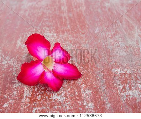 Impala Lily, Desert Rose On Wooden Table