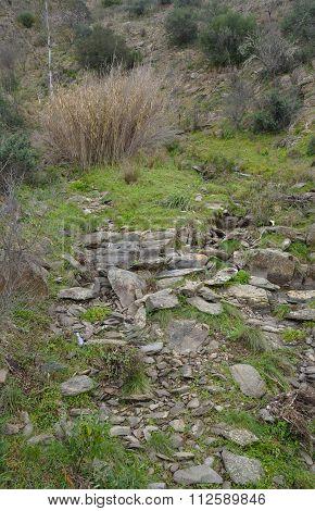 Rough mountain terrain and vegetation