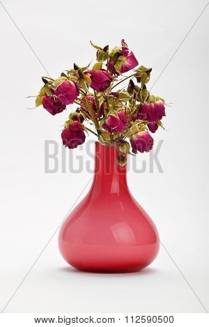 Dried Red Roses In Pink Vase On White Background