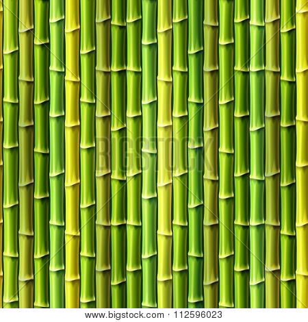 Seamless Bamboo Background. Vector Illustration, Eps10.