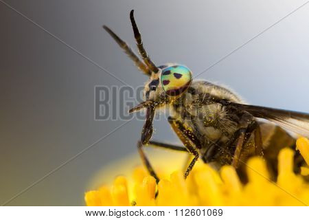 gadfly on flower