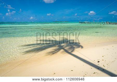 Coconut tree shadow on a beach in Moorea