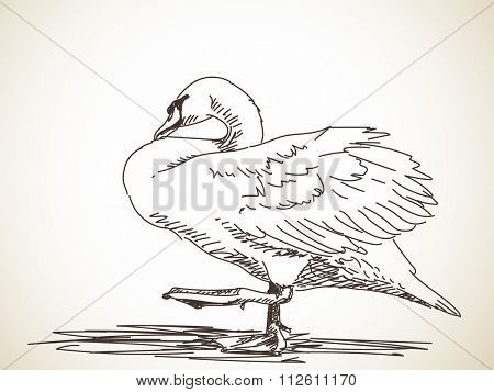 Sketch of swan standing on one leg. Hand drawn illustration