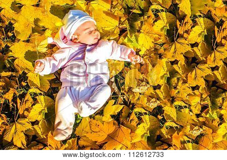 Baby Lay Foliage Ground Autumn