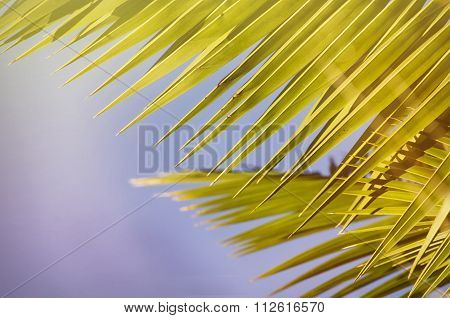 Palm Leaf Over Blue Sky