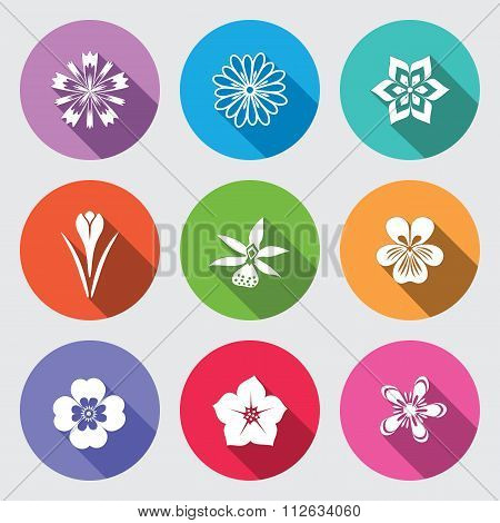Botany flower set. Camomile, daisy, petunia, chrysanthemum, orchid, forget-me-not, crocus, saffron,