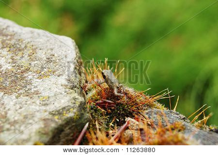 A Little Frog On The Moss-grown Stone