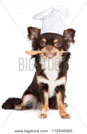 dog in a cook hat holding a spoon
