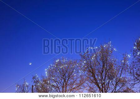 Illuminated Treetop In Zagreb