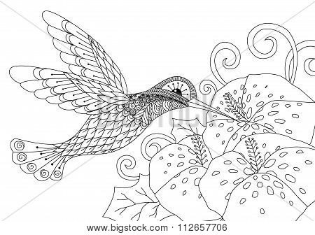 Zentangle humming bird design for coloring book for adult