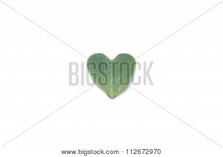 Small sprout leaves