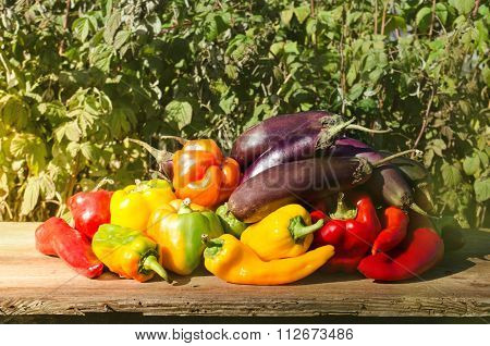 Group of colorful peppers, aubergine
