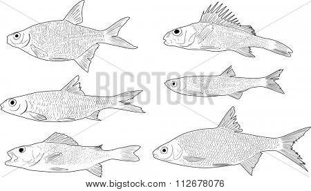 illustration with set of six freshwater fishes isolated on white background