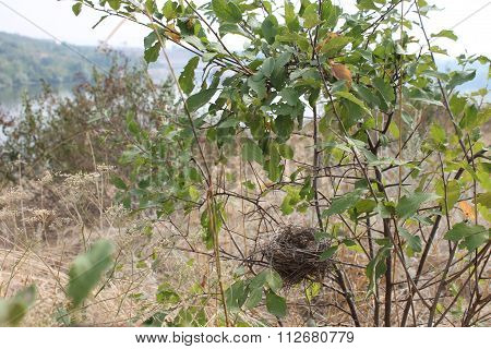 Bird Nest In The Grass