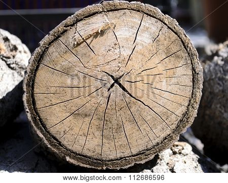 cut stump texture