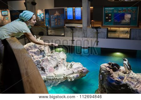 USA, BOSTON -?? 06 SEP, 2014: Woman is standing near two penguins at the New England Aquarium.