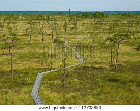 Marshlands in Estonia