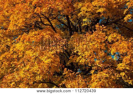 Colorful leaves of trees and shrubs.
