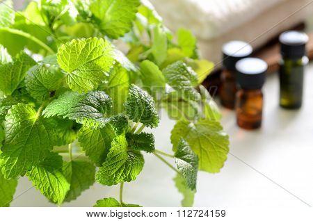 lemon balm and essential oils
