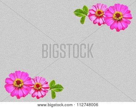 zinnia flower on clean cement wall