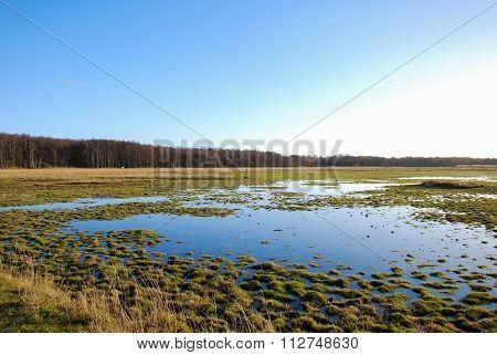 Green Wetland By Sunshine