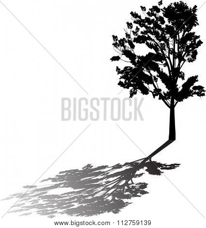 illustration with broad-leaved tree with reflection isolated on white background