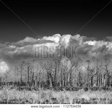 Savannas Wetlands