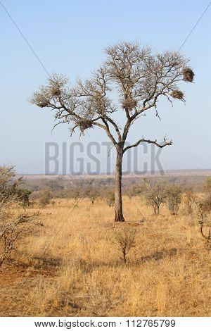 beautiful landscape in Kruger National Park.