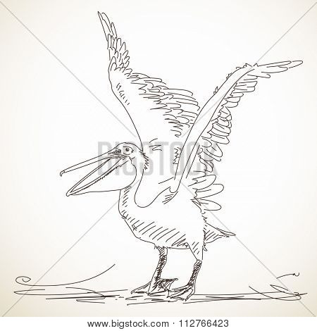 Hand drawn sketch of pelican with spread wings