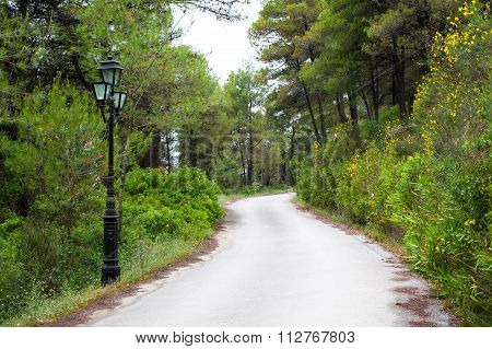 The road in the forest, trees and street light