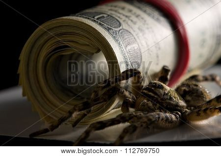 Spider And Dollars - Money Protection Concept