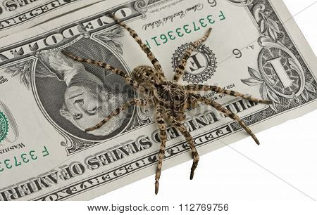 One Dollar Note And Poison Spider