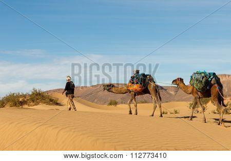 Bereber Leads Camels Through The Desert, Morocco