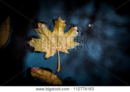 Autumn Leaf In The Puddle