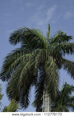 Palm Tree Branch Cutting